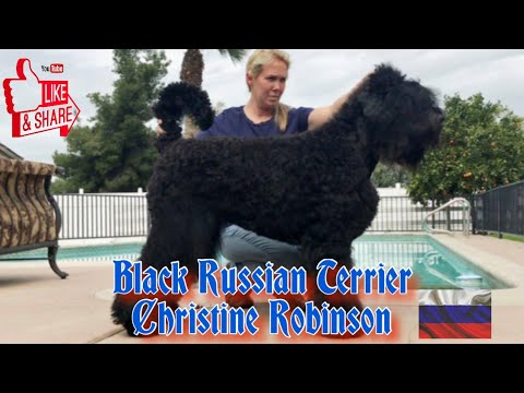 Christine Robinson - Black Russian Terriers | HOD #4