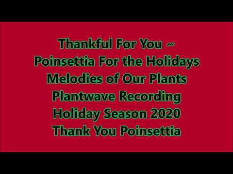 Thankful For You ~ Poinsettia For the Holidays