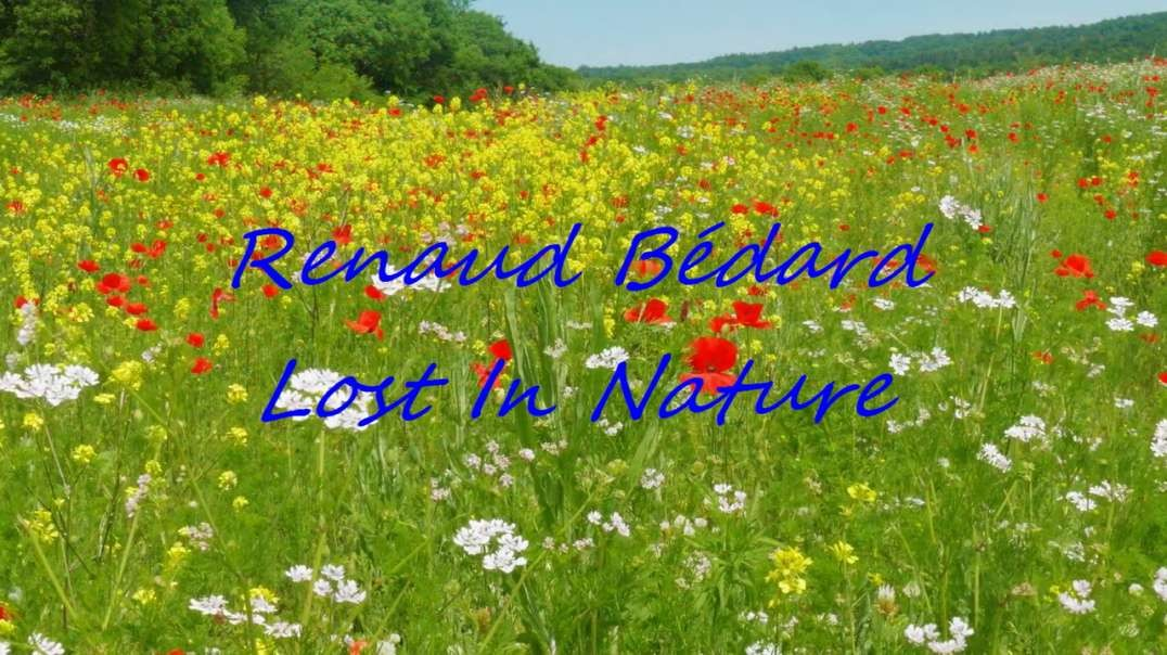 RENAUD BÉDARD - LOST IN NATURE 🌷🌹🌺☘🌸🌼