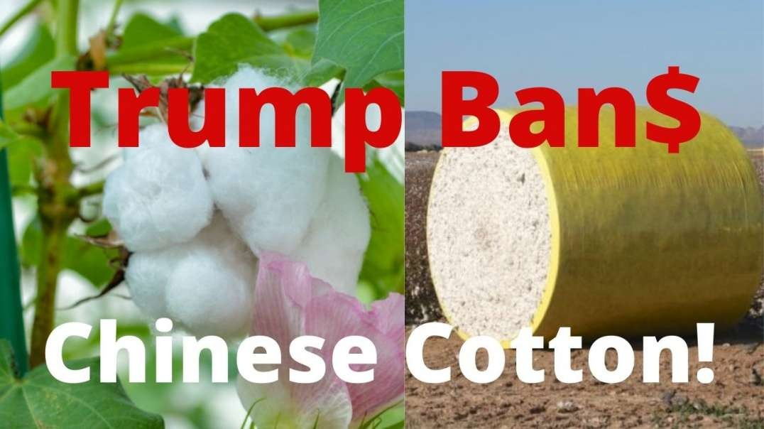 Trump Bans Chinese Cotton