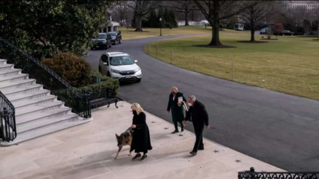 Biden family dogs 'Champ' and 'Major' get settled in to the White House