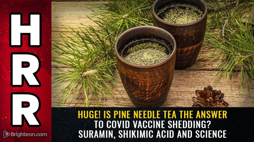 HUGE! IS PINE NEEDLE TEA THE ANSWER TO COVID VACCINE SHEDDING? SURAMIN, SHIKIMIC ACID AND SCIENCE [2021-05-09] - MIKE ADAMS (VIDEO)
